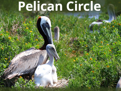 Pelican Circle lettering