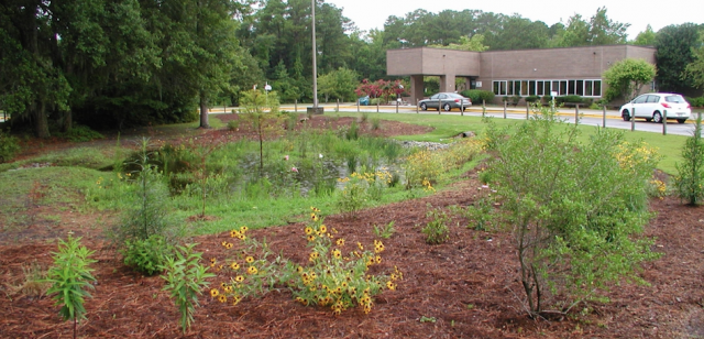 Bradley Creek School LID rain garden.