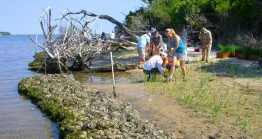 Volunteers plant marsh grass behind a sill of bagged oysters to stabilize shoreline erosion at Jones Island.