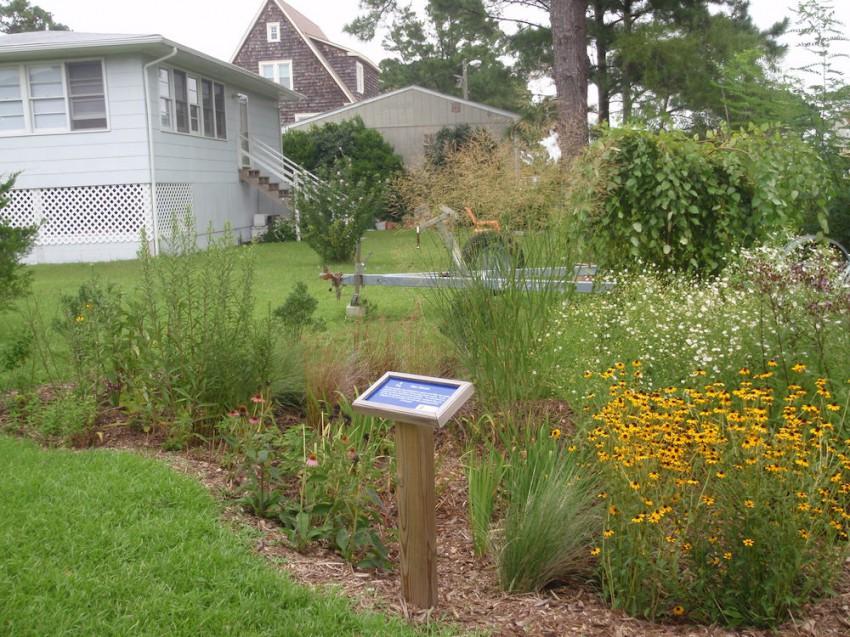 NC office rain garden