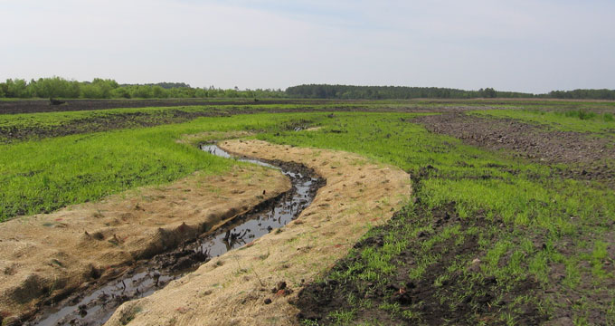 Mimicking the natural drainage is key to successfully restoring the hydrology of the tract. A plan, below left, was drawn to turn more than 200 acres of flat cropland into a forested wetland bisected by a creek and tidal marsh. The rudimentary creek takes shape, above and looks more natural later when the marsh grasses mature.