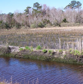Saltwater grasses were planted along the creek to create the marsh.