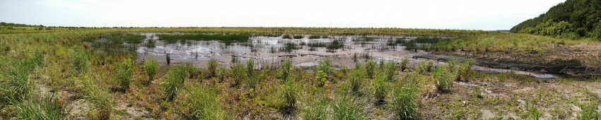 Wetlands tie together land and water, and are some of the most productive ecosystems in the world.