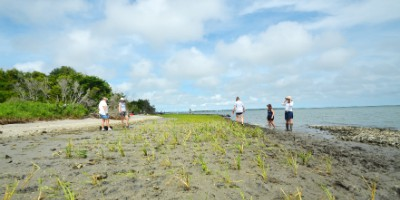 This living shoreline is helping to stabilize erosion on the southeast edge of Carrot Island near Beaufort.