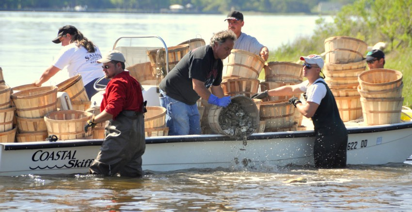 Oyster cultch planting