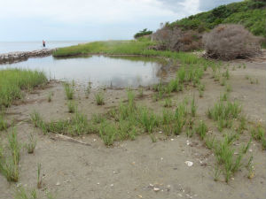 Before: A Living shoreline at Springer's Point Nature Preserve, Ocracoke, 2013
