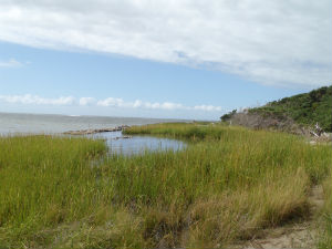 After: A Living shoreline at Springer's Point Nature Preserve, Ocracoke, 2014