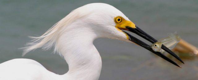 CE project egret