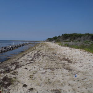 Off Shore sill is built and first marsh grasses are planted, June 2011