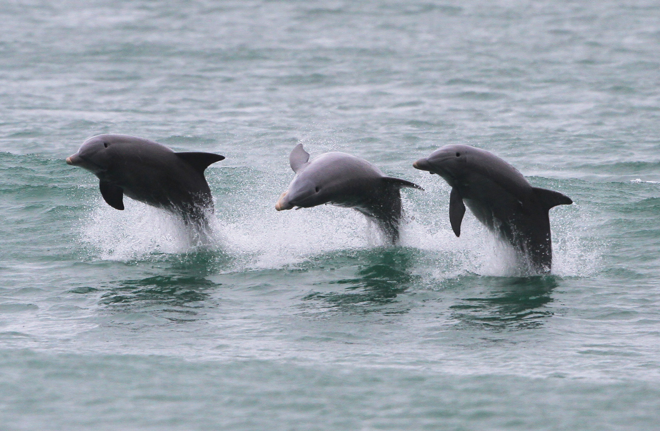 Dolphins; photo by Sam Bland