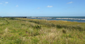 The shoreline is now well established, thanks to the  teachers who participated in the Planet Wetlands seminar.