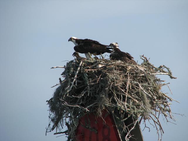 Coastal Birding Cruises 1