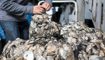 Federation intern, Daniel Salazar, worked hard to keep up with bagging all 25 bushels of oysters as they were eaten during the Hatteras Island Oyster Roast. Photo courtesy: Daniel Pullen Photography