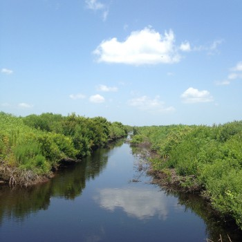 The wetland restoration work being done will reduce the amount of impaired runoff that drains into Pamlico Sound.