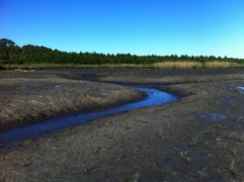 Newly created salt marsh habitat near Ward Creek.