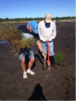 Volunteers Tom & Rick work together to plant new marsh grasses