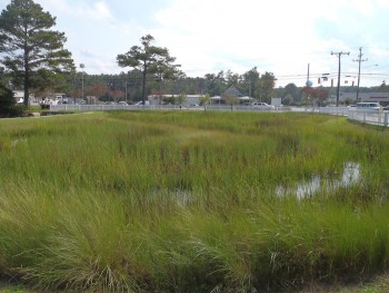 The site today is a flourishing wetland with thriving native plants that provides effective stormwater management.