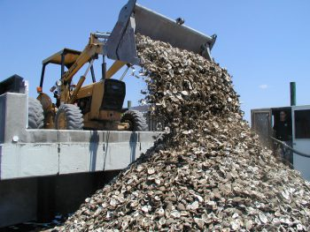 Oyster shells being stockpiled for oyster reef restoration work.