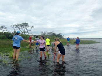 Federation staff plant smooth cordgrass at Sanders Point.