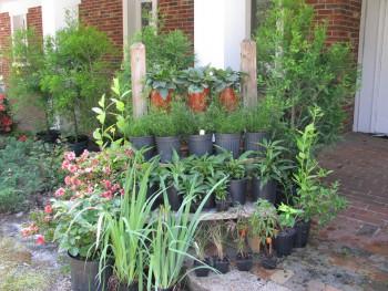 plant sale_1