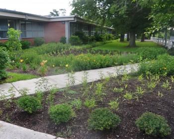 white oak rain garden