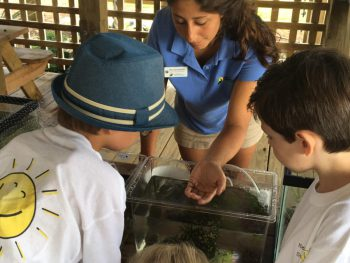 Americorps member Nina Quaratella shows kids a sea spider at Touch Tank Tuesday.