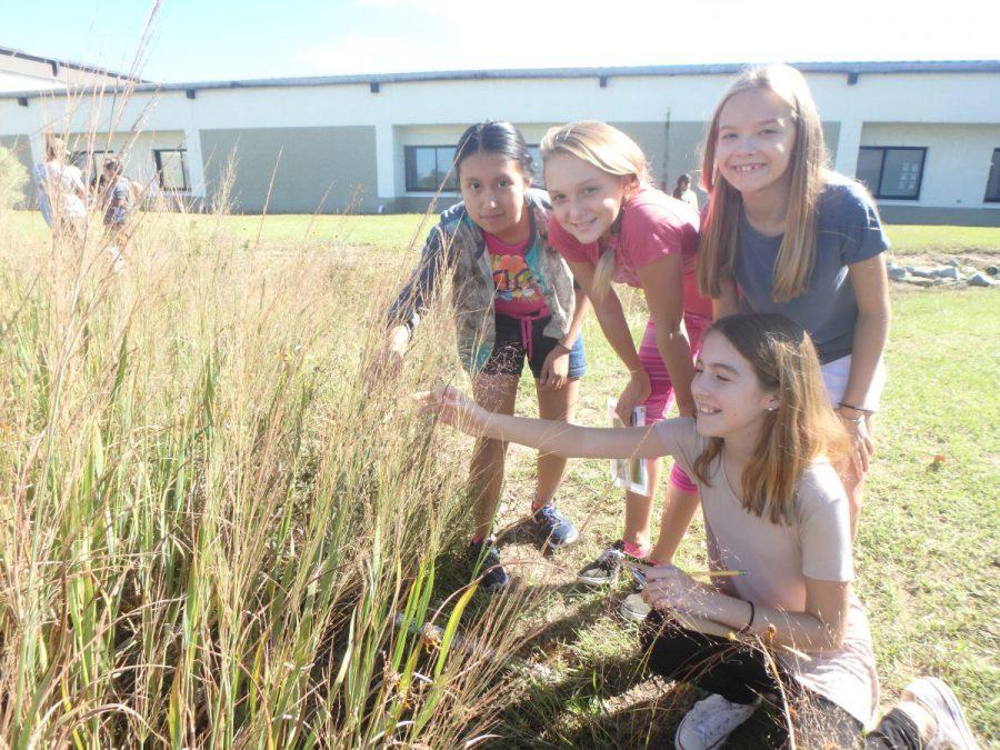 Rain gardens are fun and collaborative outdoor classrooms. Photo: Sara Hallas