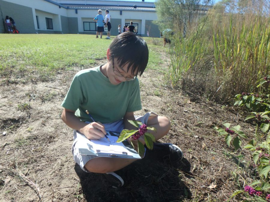 A student draws a beautyberry from the rain garden. Photo: Sara Hallas