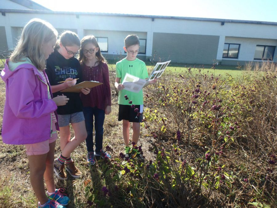 The sixth-grade students were able to work in groups to make interesting observations about their assigned species. Photo: Sara Hallas