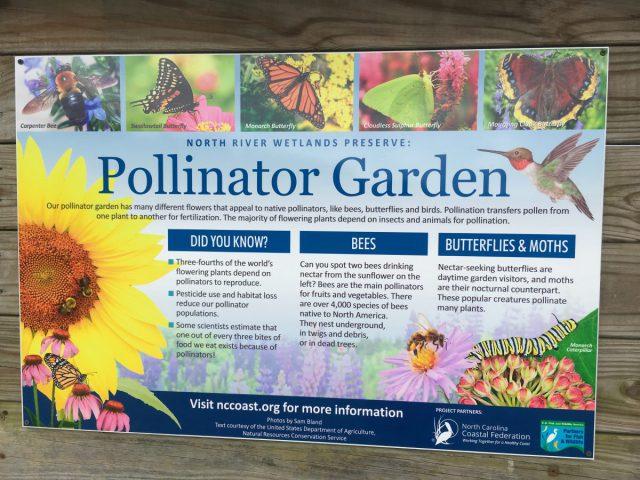 Pollinator Garden Will Benefit Vital Birds Butterflies