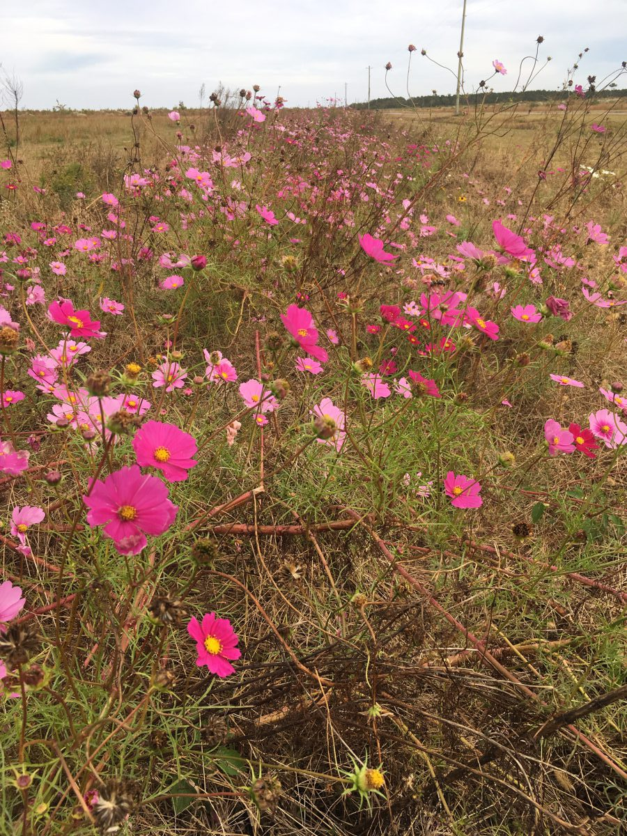 Pollinator garden will benefit vital birds, butterflies and bees ...