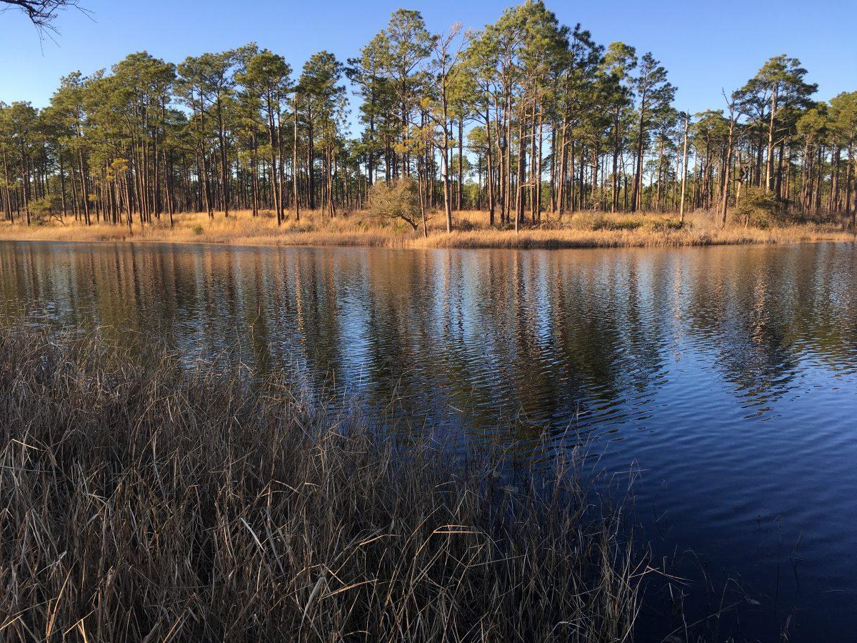 Patsy Pond Nature Trail North Carolina Coastal Federation