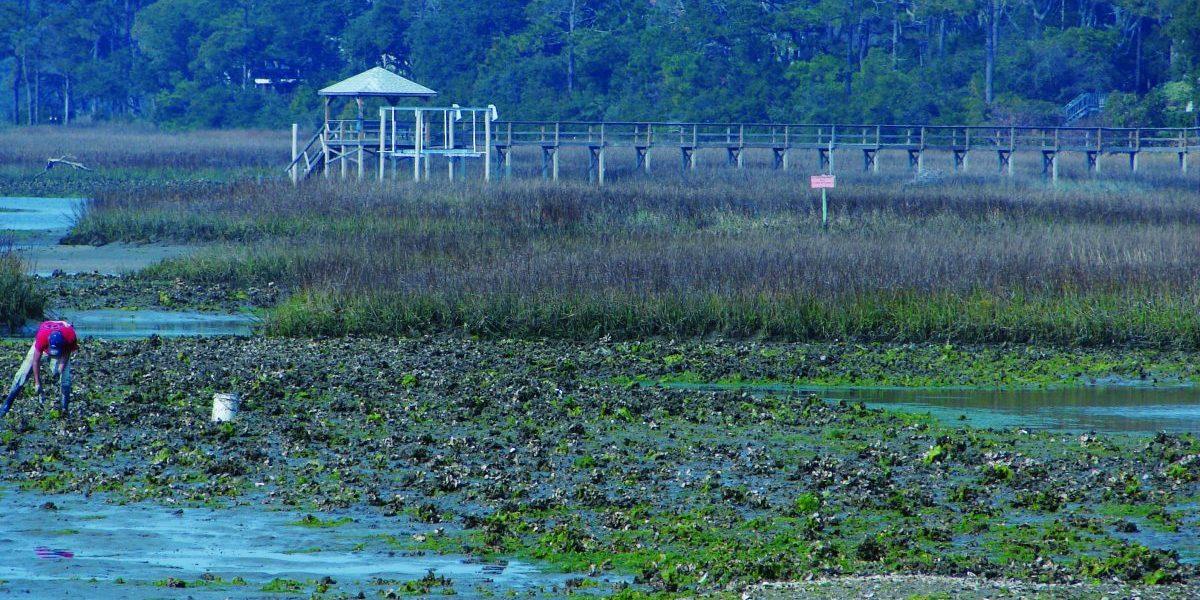 Lockwood Folly Watershed Restoration   North Carolina
