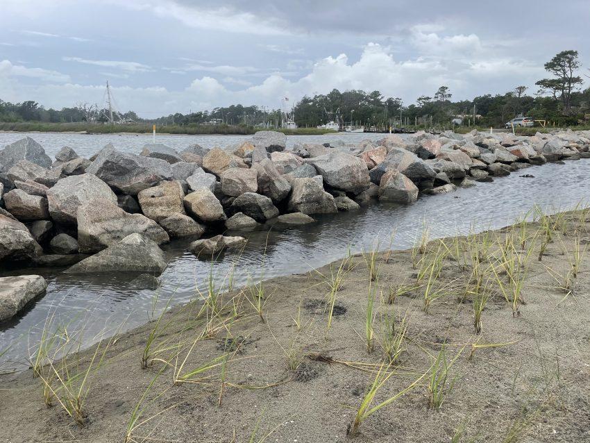 Atlantic White's Harbor Living Shoreline Planting