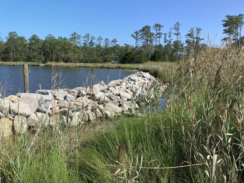 The living shoreline at Whittaker Pointe in Oriental