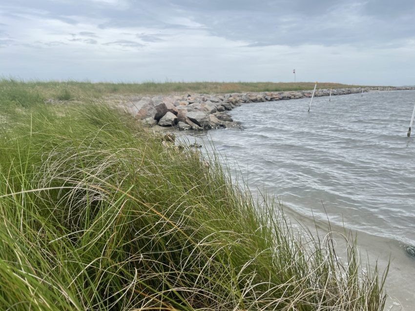 The living shoreline at White Point in Atlantic Harbor