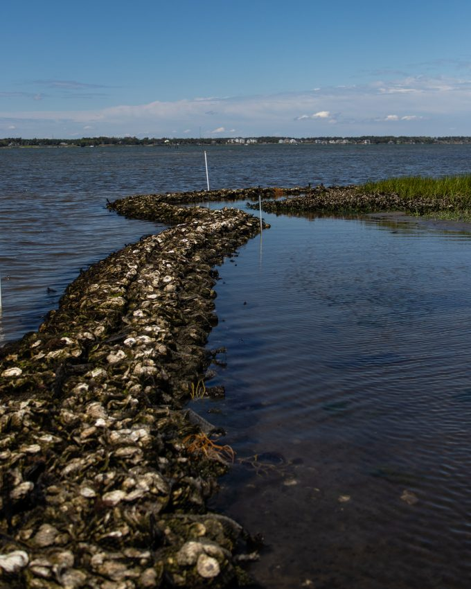 Pine Knoll Shores Living Shoreline