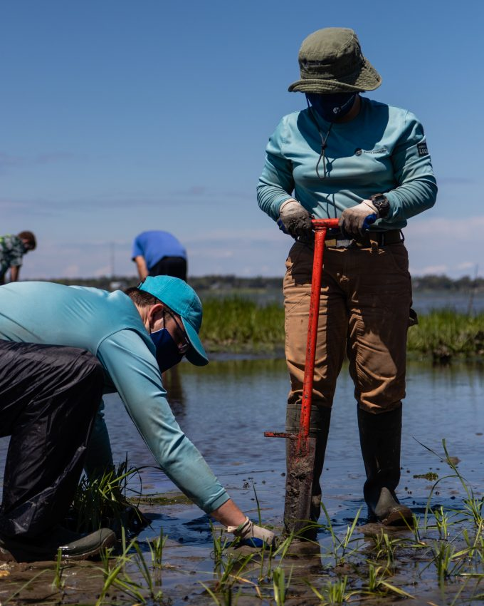 Planting taking place at the living shoreline in Pine Knoll Shores